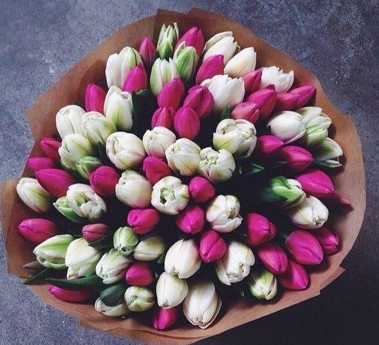 #118. Тюльпаны бело-розовые 45 шт