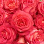 14-roza-iguazu