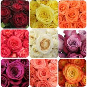 Ассортимент роз