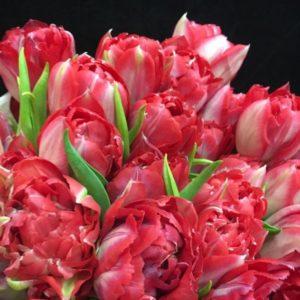 # 391 пионовидные тюльпаны