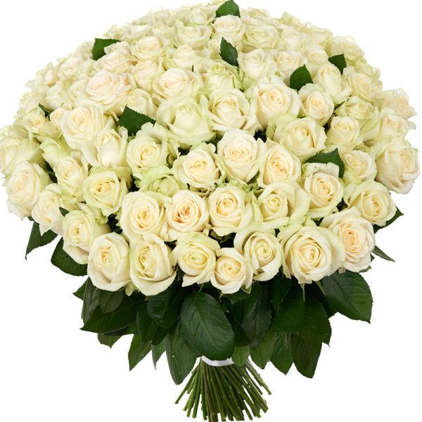 #140. Розы белые 101шт