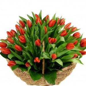 #120. Корзина из 51 красного тюльпана